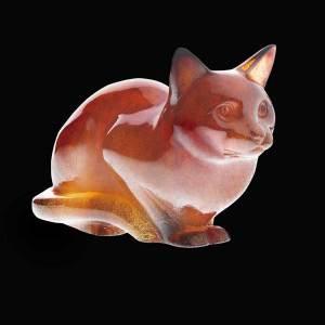 Daum cat