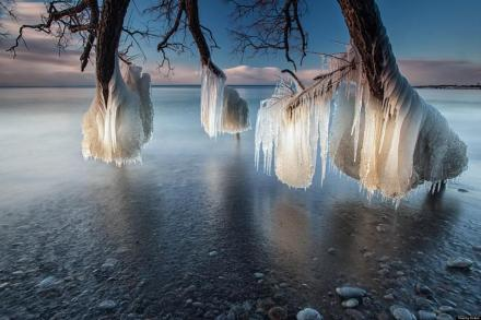branches- ice